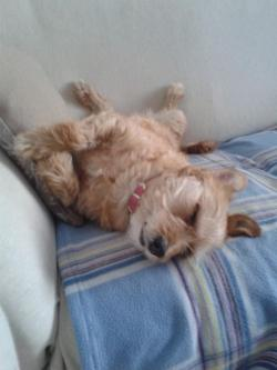 stella che dorme